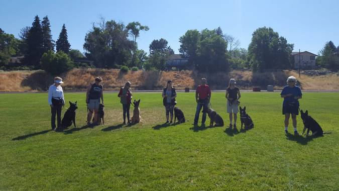 Neumond K9 Training Obedience Class